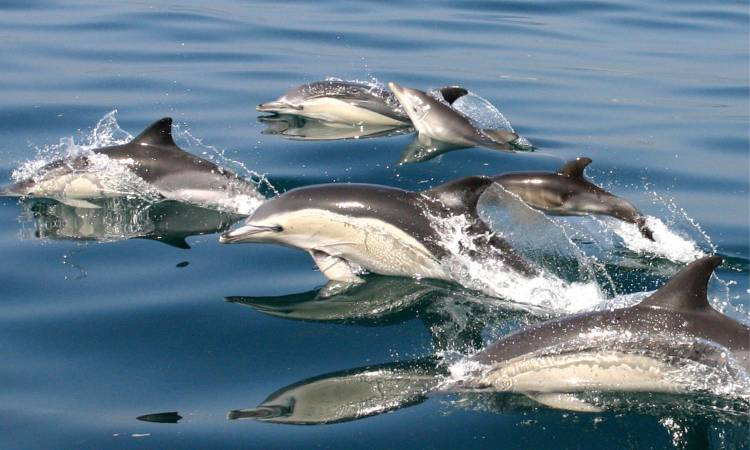 Abundant sea-life in Gibraltar's local waters