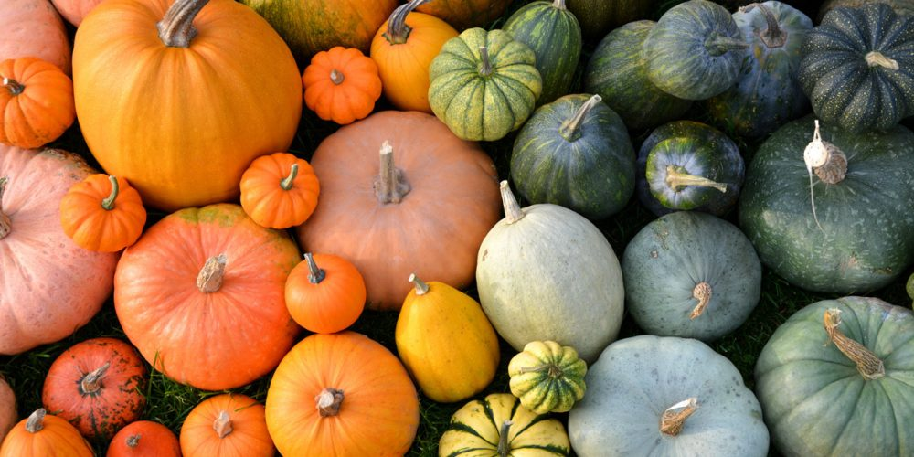 Pumpkins are not only for Halloween