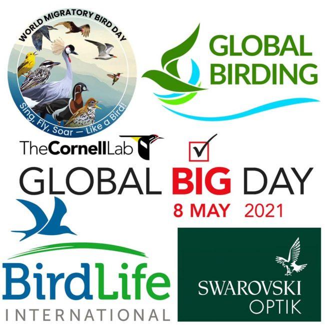 Global Birding Big Day