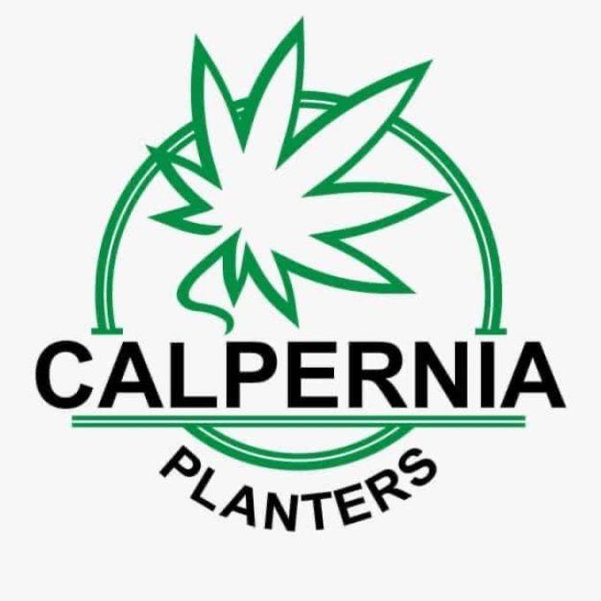 Calpernia Planters Gibraltar