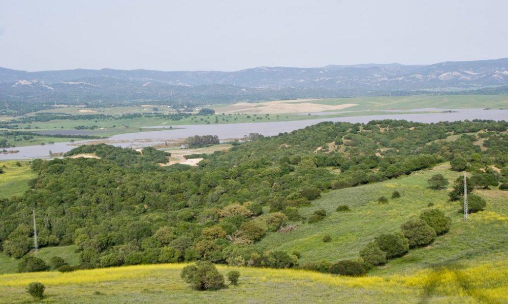 Wetlands of the River Barbate Basin